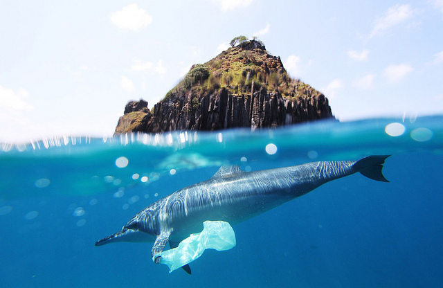 Grasping at Straws? Banning plastic without further action won't stem the tide